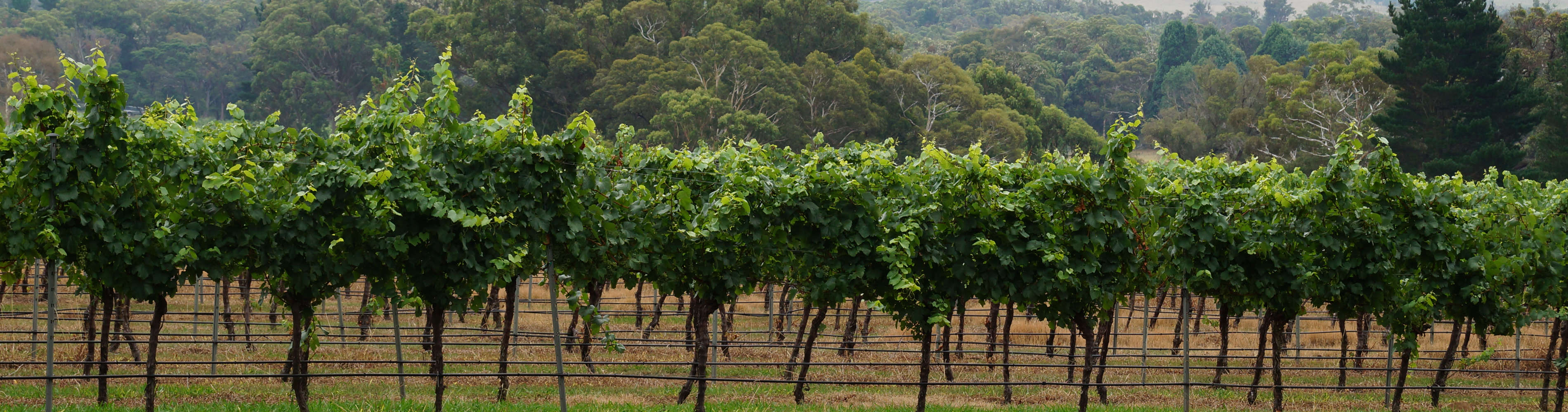 nattai creek vines